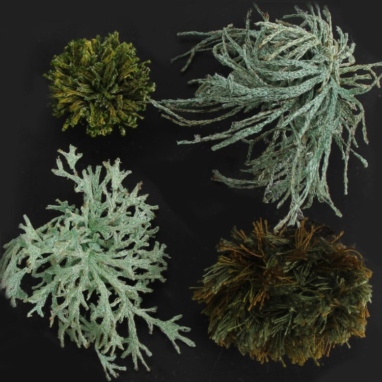 Amanda : Moss and Lichen TQ 085 439, 2018, Built up layers of free machine embroidery